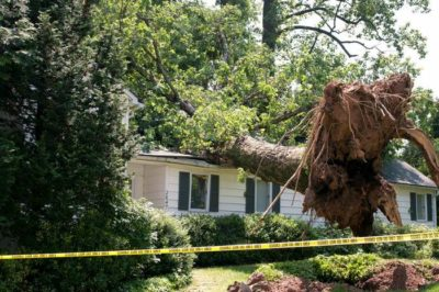 A picture of a tree that fell on a house.