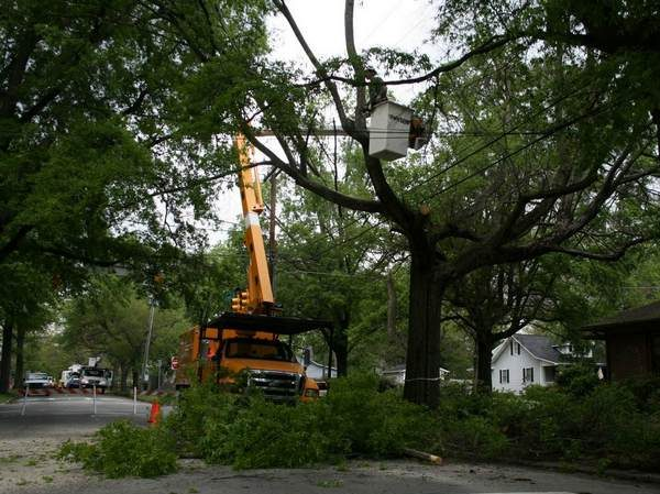 Picture of tree being removed in Lancaster