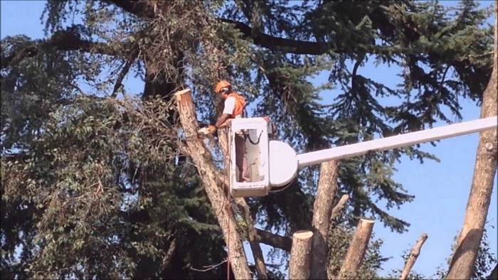 A picture of a man in a bucket cutting a tree