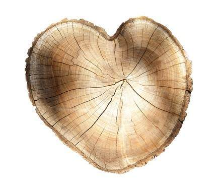 Picture of a heart-shaped stump representing Lancaster tree health